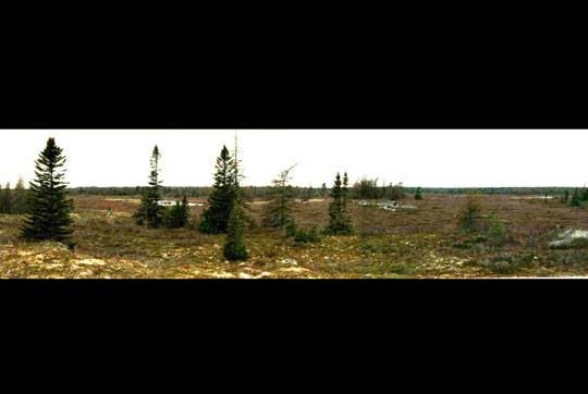 The Barrens on the Shelburne River: Photo credit: Jim Todd