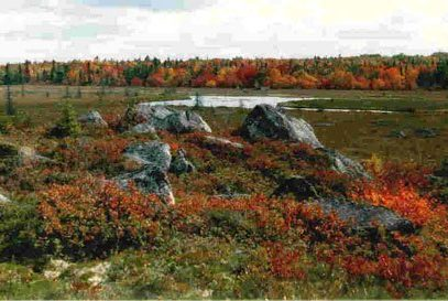 Moosehide Stream, fall colors on stillwater above Whitesand Lake. Photo Credit: Jim Todd