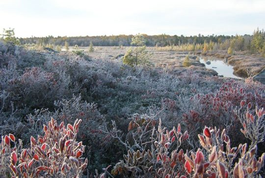 Early Fall morning on Moosehide Stream. Photo Credit: Jim Todd.