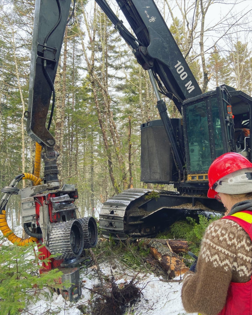 started on the Spruce Selection Harvest - January 2021