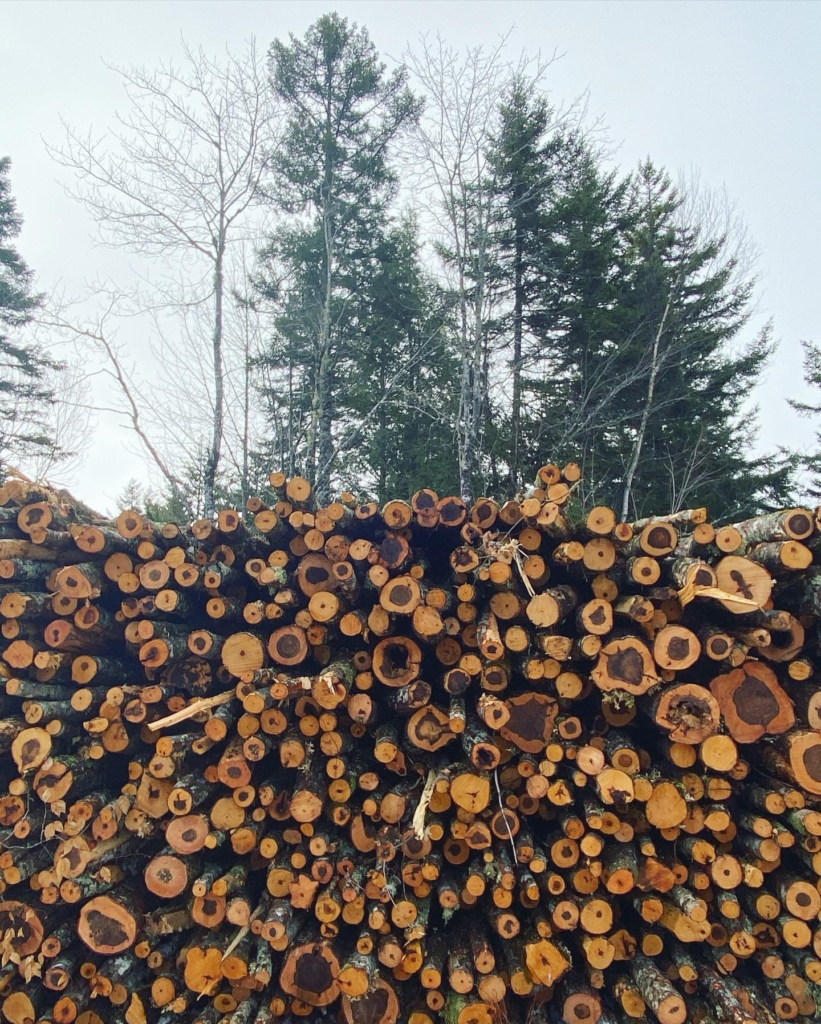 Photo: Firewood pile coming off the Hardwood Selection Harvest - January 2021