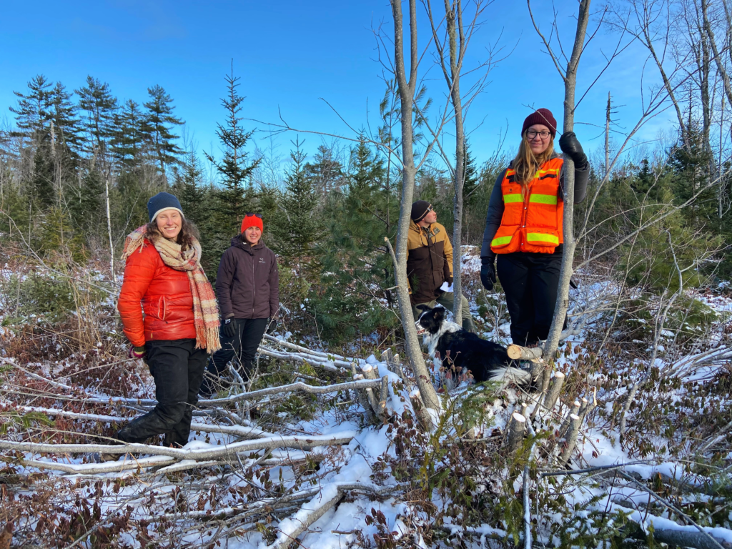 December 2020 - Little Mud Lake area pre-commercial thinning site assessment with MCFC Executive Board Members (left to right) Katie McLean, Abby Lewis, Fritz Meyer, and staff member Jennika Hunsinger