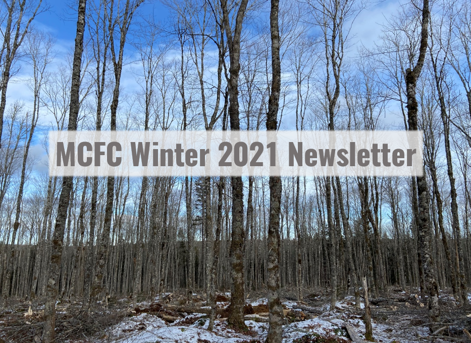 Medway Community Forest Co-op Winter 2021