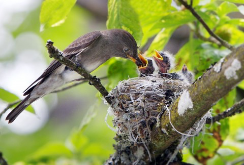 Robin's Nest - Land Birds at Risk