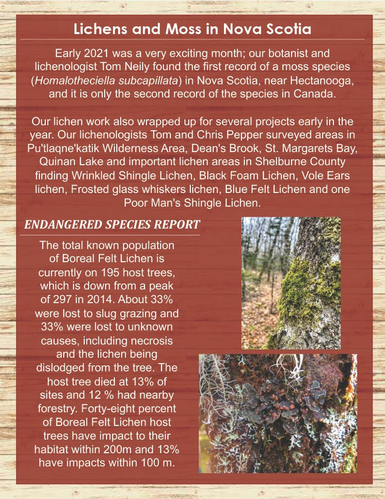MTRI Summer Newsletter, Page 3 - Lichens and Moss