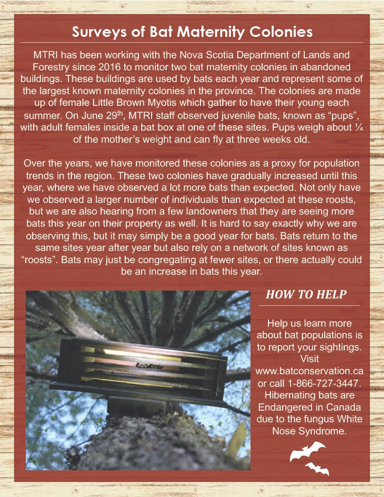 MTRI Summer Newsletter, Page 3 - Surveys of Bat Maternity Colonies