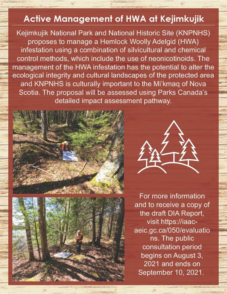 MTRI Summer Newsletter, Page 7, Active Management of HWA at Kejimkujik